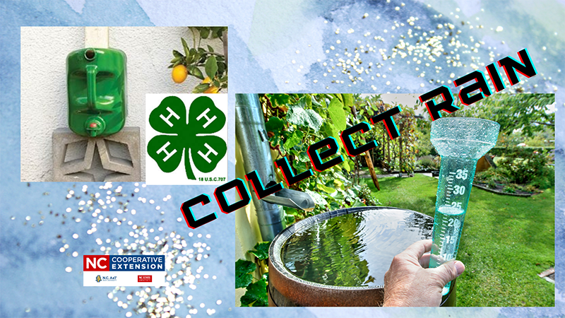 """Photos showing rain barrels and 4 H logo with """"Collect Rain"""" printed overtop."""