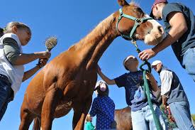 Horse surrounded by young people.
