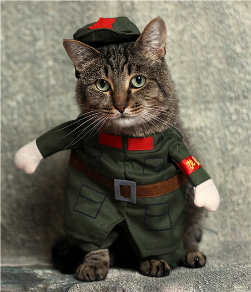 Cat in costume.