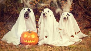 3 dogs with a ghost outfit and a carved pumpkin in front.