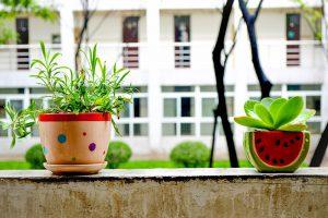 2 houseplants on a window ledge.