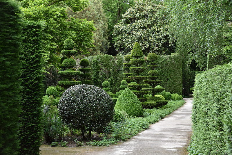 Beautiful sculptured trees surround a walkway.